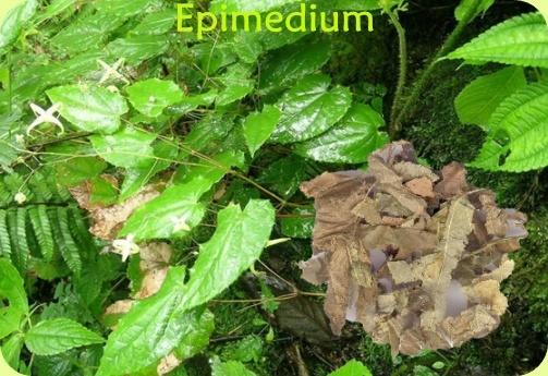 Horny Goat Weed Extract Icariin/Epimedium 40% Icariin/Epimedium P. E. for  Sexual Power
