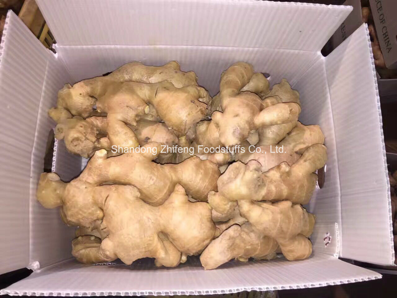 Air Dry Ginger in China