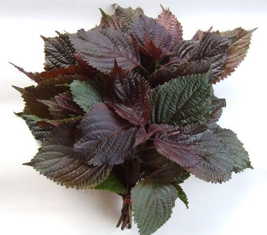 China High Quality Perilla Leaf Extract/Folium Perillae Extract - China  Folium Perillae Extract, Perilla Leaf Extract