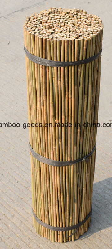 China Large Dry Raw Moso Bamboo Poles for Sale Photos