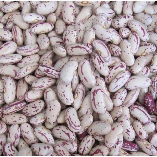 China Organic Dried Light Speckled Kidney Beans China Cheap Light Speckled Kidney Beans High Quality Light Speckled Kidney Beans