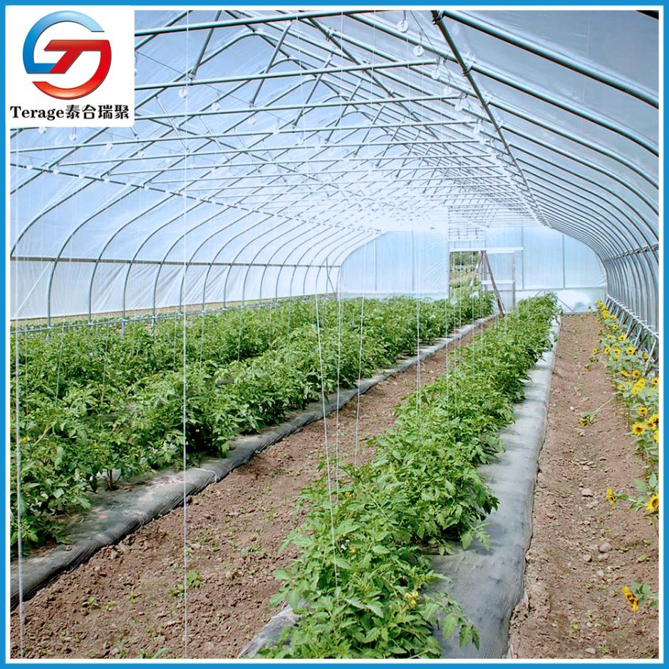 Pvc Greenhouse-China Pvc Greenhouse Manufacturers & Suppliers