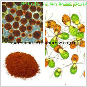 China Dunaliella Salina Powder Dunaliella Powder