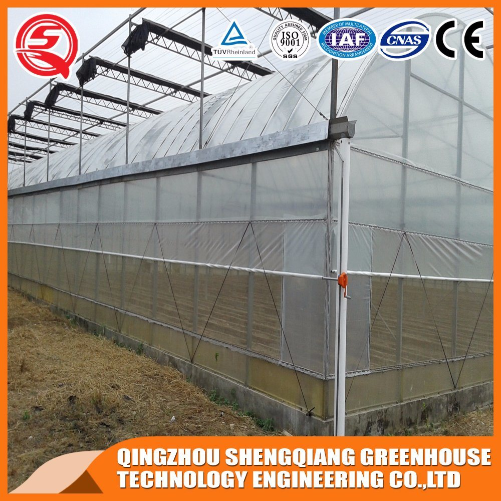 Agriculture Multi Span Film Greenhouses for Plants pictures & photos