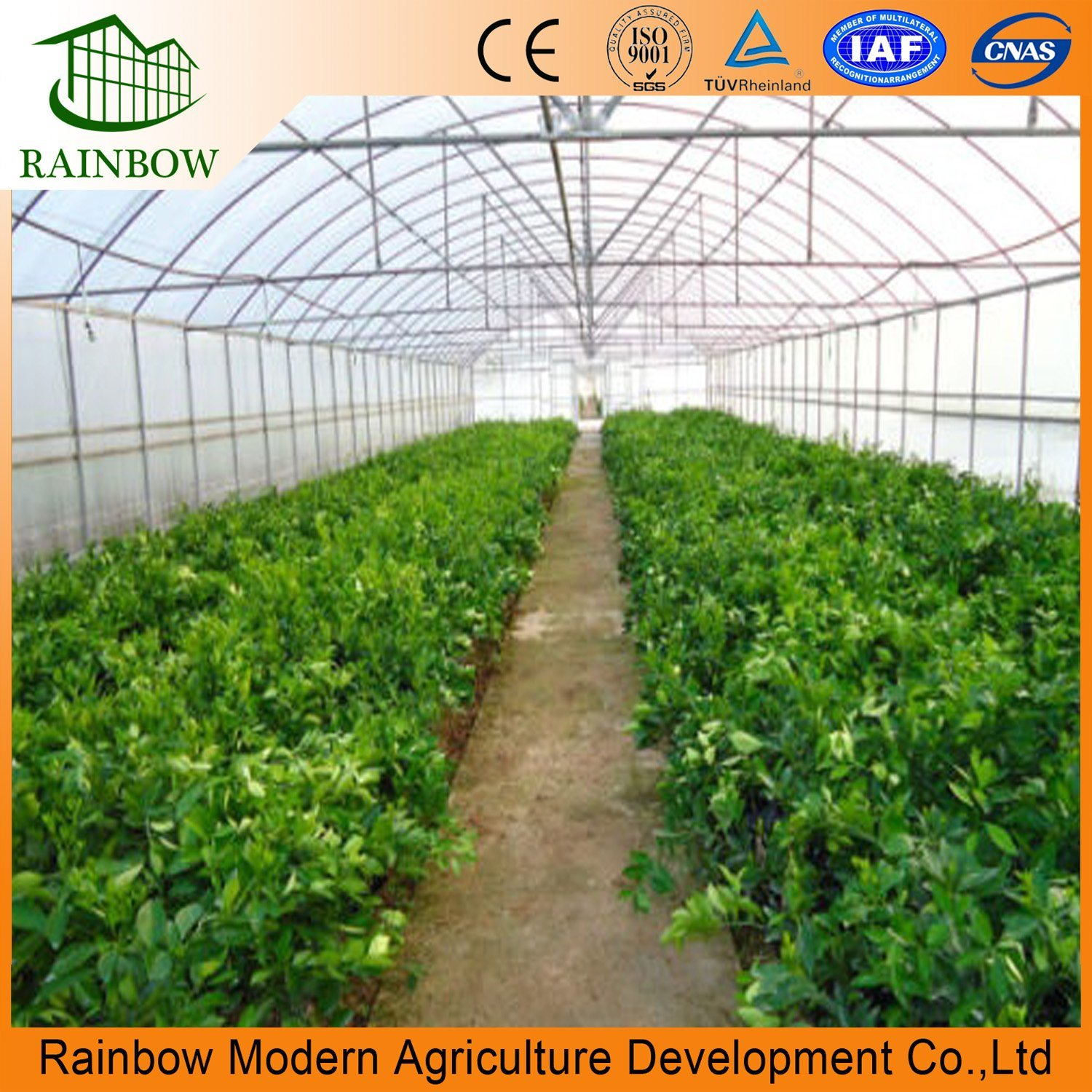 Pleasing China Arch Roof Type Tunnel Greenhouse Backyard Greenhouse Home Interior And Landscaping Palasignezvosmurscom