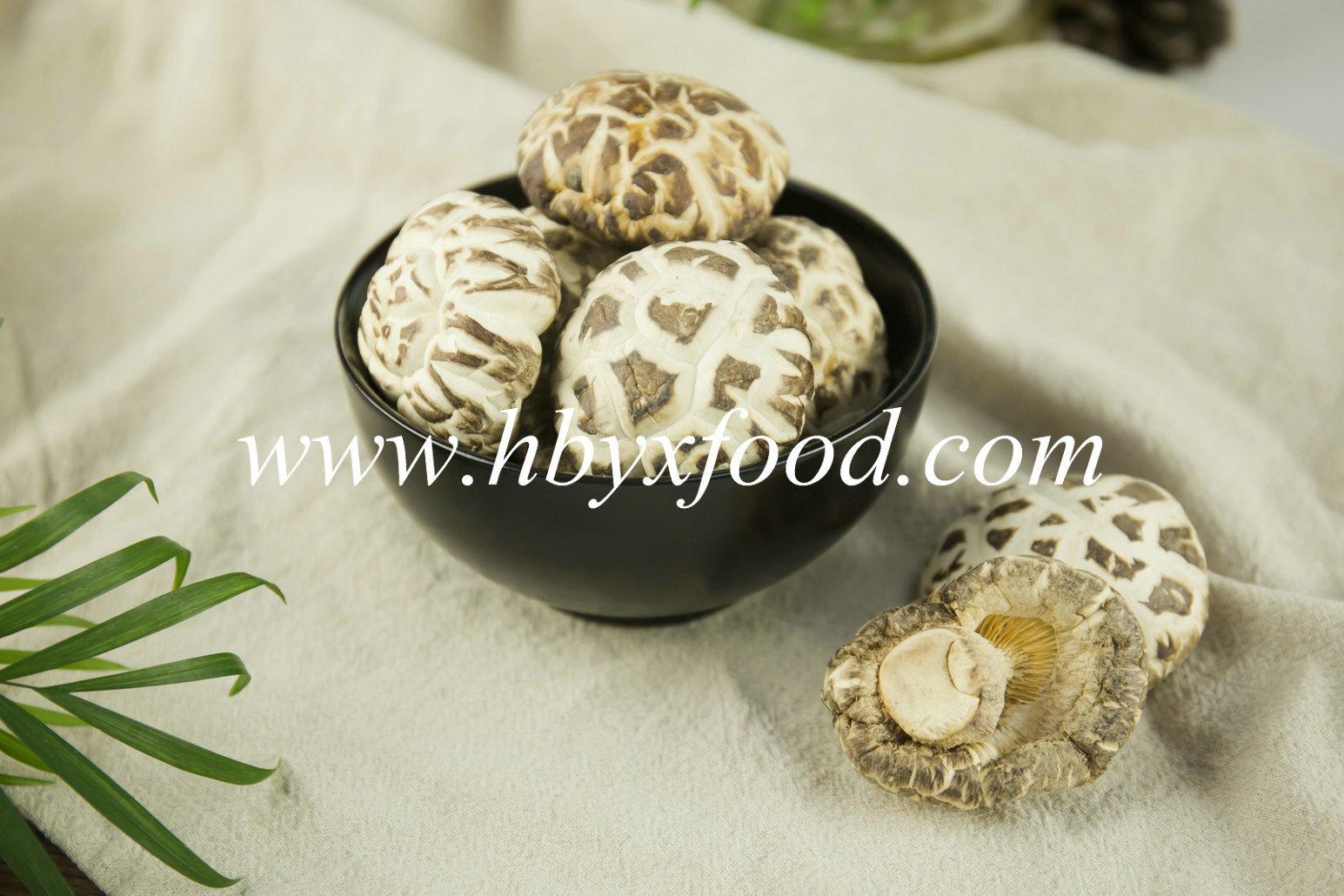China High Quality Dried Vegetable White Flower Mushroom Supplier