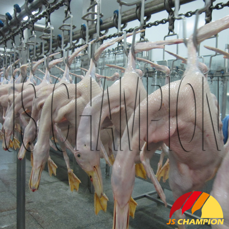 Overhead Transmission Line for Poultry Slaughterhouse