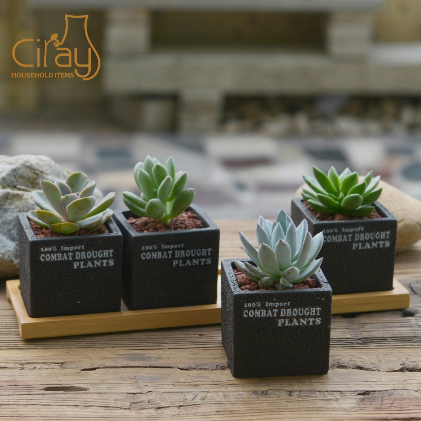 China New Collection Cement Succulent Pots With Long Bamboo Tray China Pot And Cement Pot Price