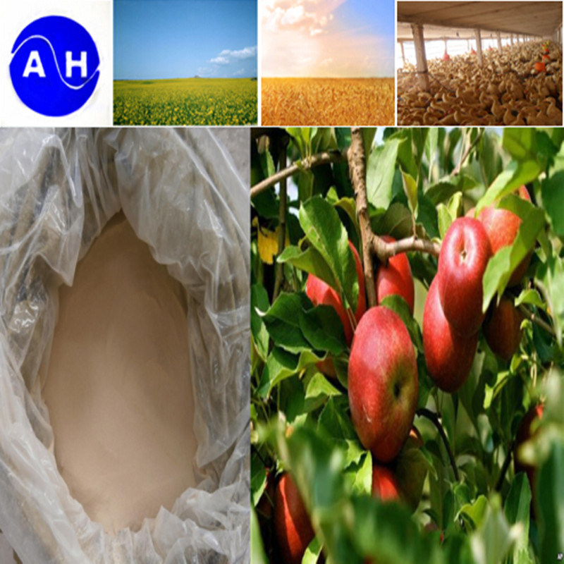 Vegetable Source Amino Acid Free From Chloridion Fertiliser Amino Acid pictures & photos