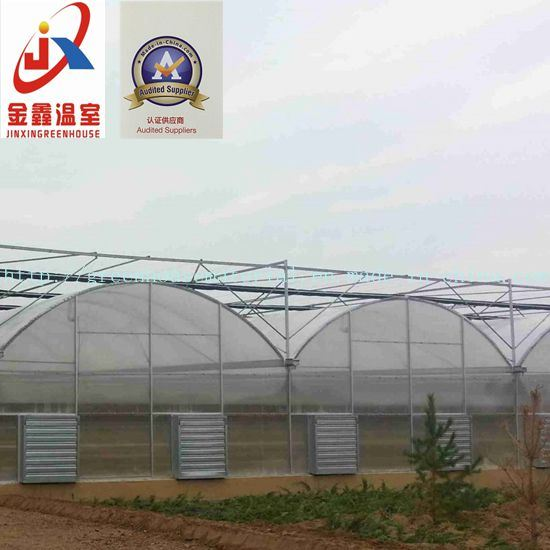 Experienced and Elegant Multi-Span Tunnel Green House