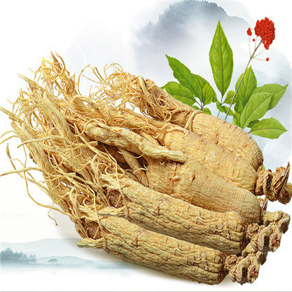 Ren Shen Chinese Herbal Medicine Natural Dried Panax Ginseng Root ...