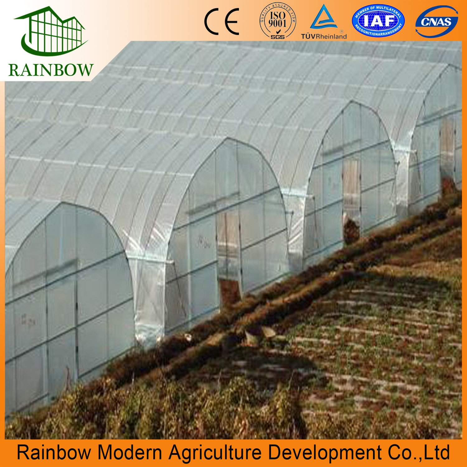 China Single Tunnel Film Vegetable Greenhouse For Sale   China Tunnelfilm  Greenhouse, Po/PE Film