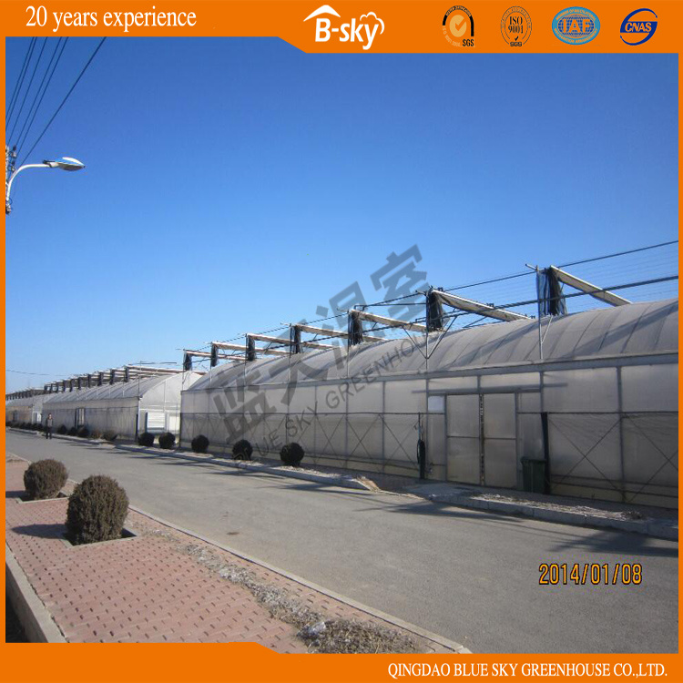 Hot Sale Low Cost Plastic Film Greenhouse