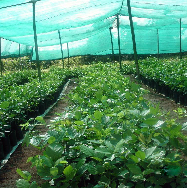 HDPE Sun Shade Nets and Agriculture Netting for Green House
