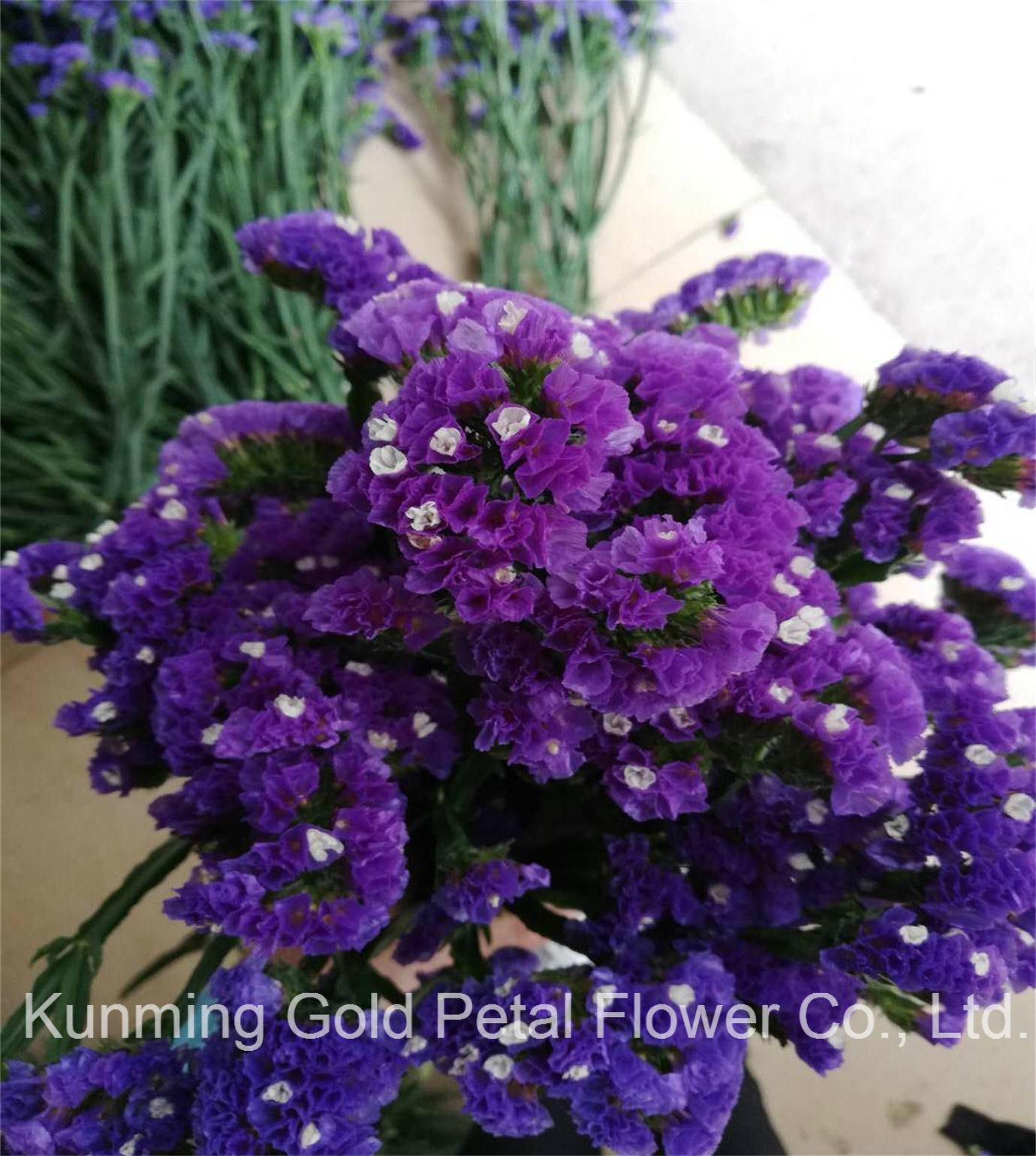 China Hot Sell Wonderful Fresh Cut Flowers Purple Statice China