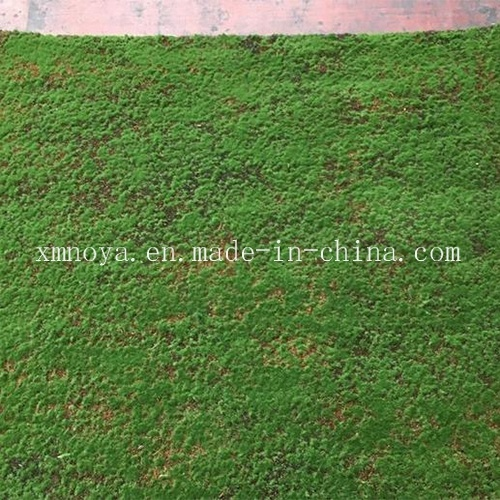 Artificial / Man-Made Fake Synthetic Moss Grass for Home Garden Decorative pictures & photos