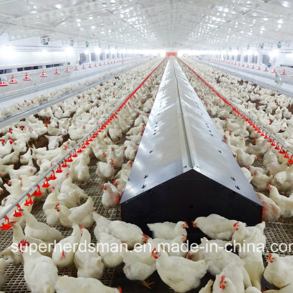 Chicken Broiler Commercial Poultry Equipment – Jerusalem House