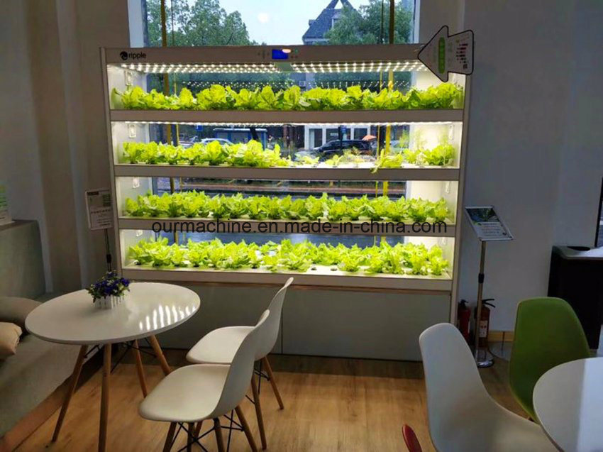 China Indoor Garden System Hydroponics with LED Grow ...
