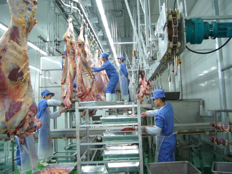 Cattle Abattoir Made in China