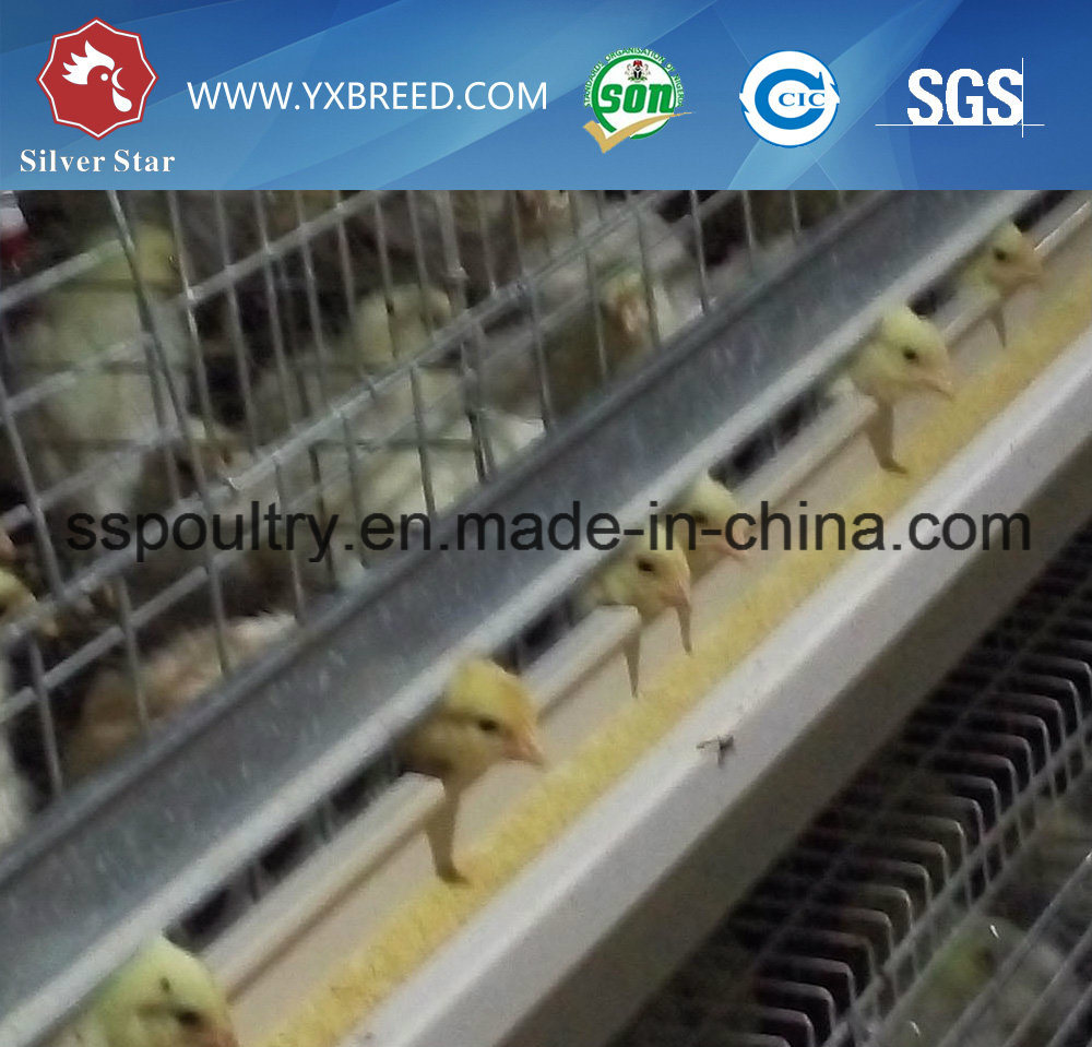 Wire Mesh Automatic H Type Broiler Cage with Cooling System