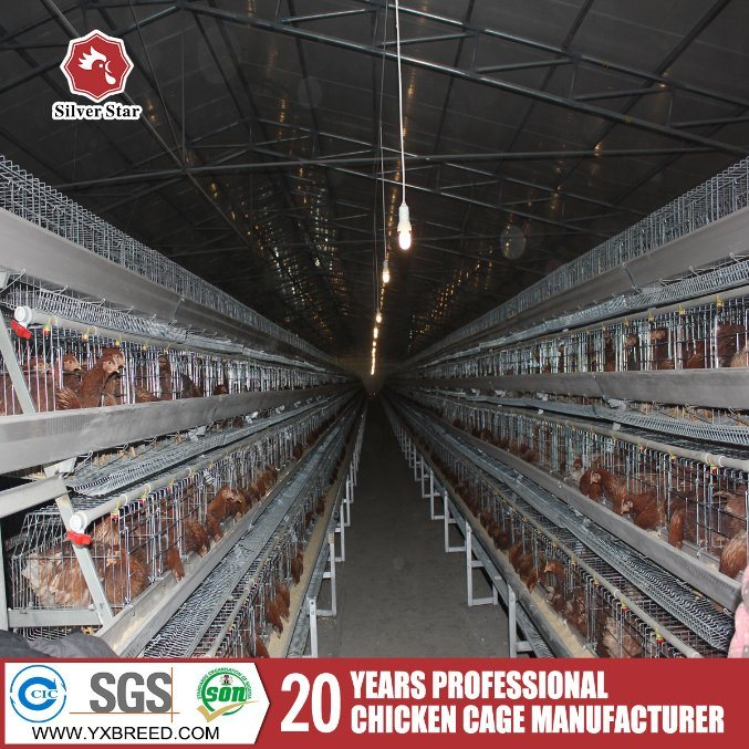 Poultry Automatic Egg Chicken Cages