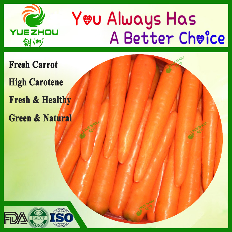 Exported S/M Size Fresh Carrot to Bangladesh with Cheap Price pictures & photos
