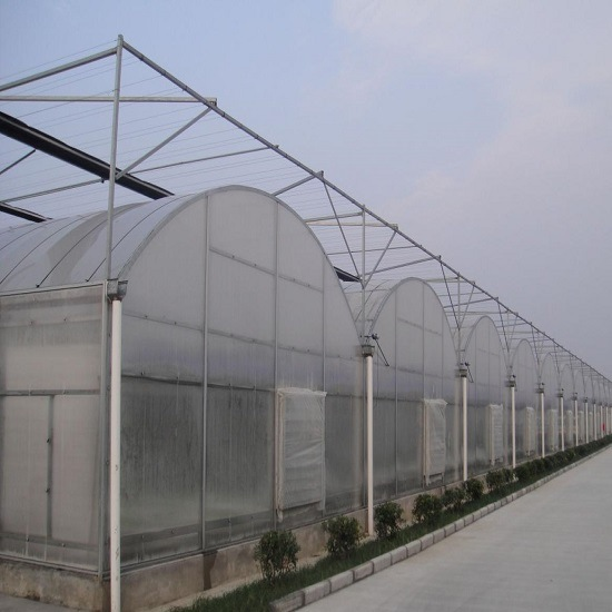 Plastic Greenhouse in Agricultural Planting