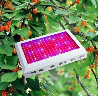 Light Panel For China 288 Lamp 1w 300watt Grow Led DY2HWIE9