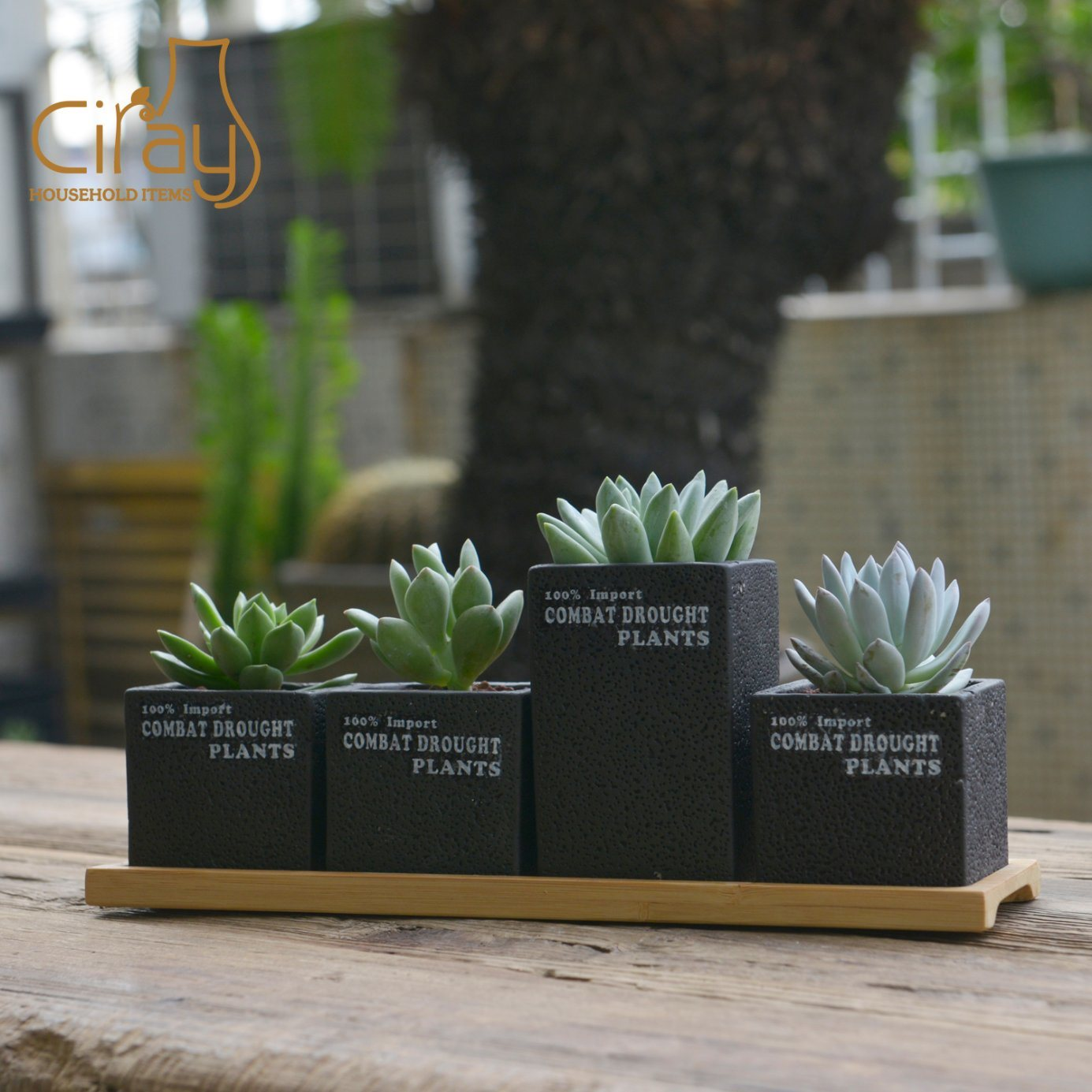China New Collection Cement Succulent Pots With Long Bamboo Tray Photos Pictures Made In China Com