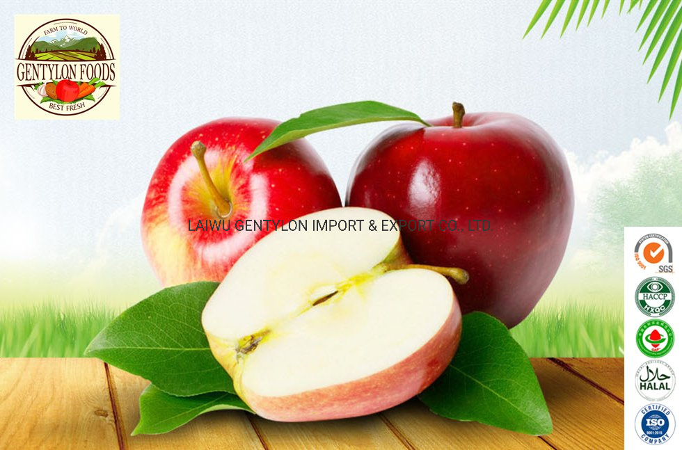 Top Quality Fruit Chinese Blush Red Fresh FUJI Apple Export Price pictures & photos