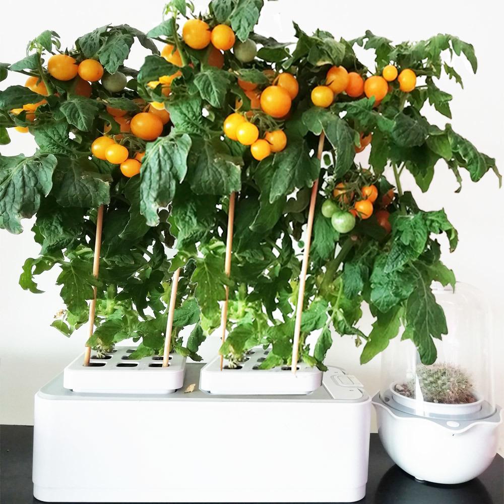 China Smart Hydroponic Vertical Garden
