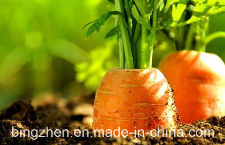 2017 New Crop Fresh Carrot Grade S From China.