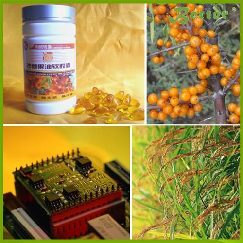 Supercritical CO2 Extraction for Seabuckthorn Seed Oil pictures & photos
