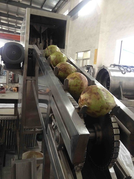 Young Coconut Cutting Machine pictures & photos