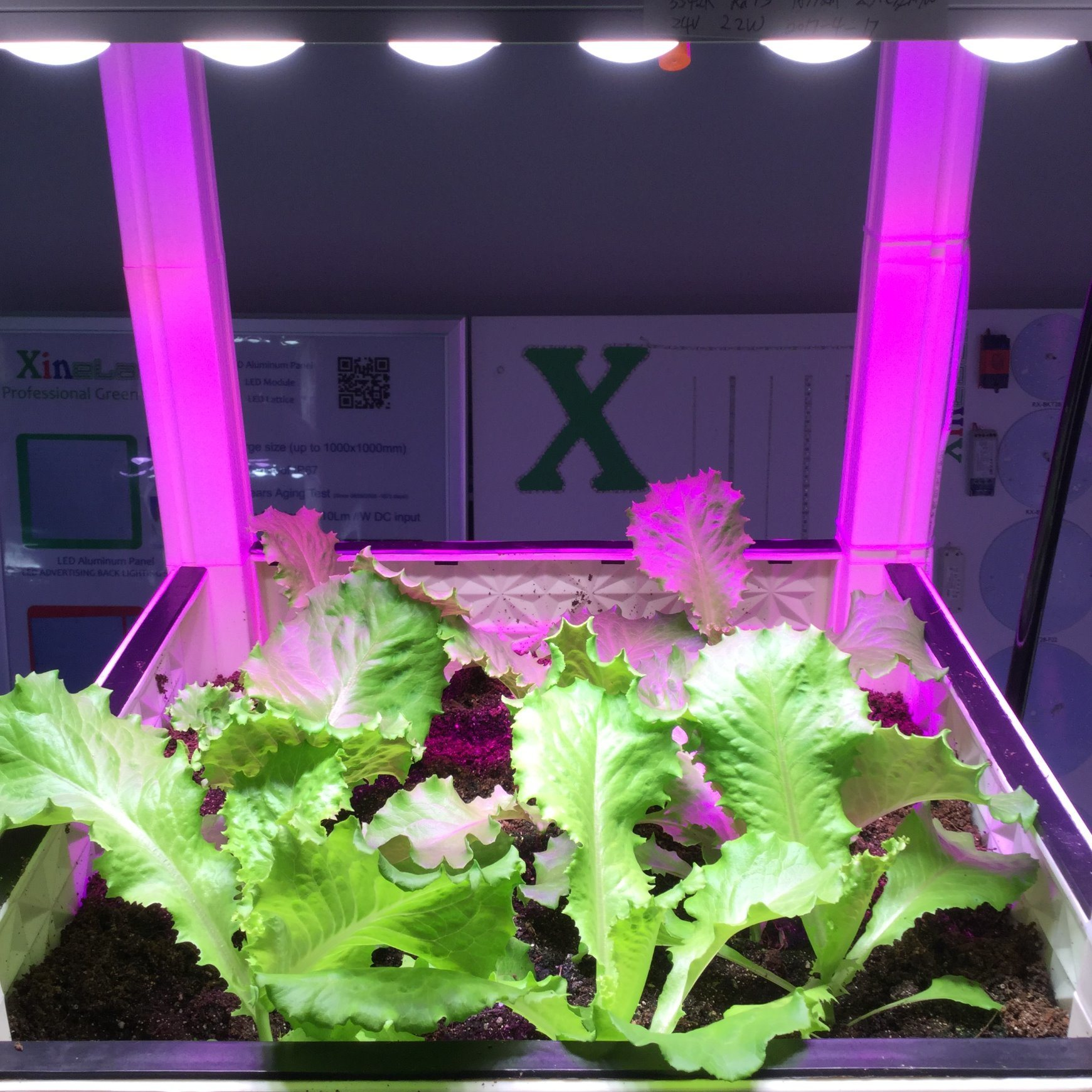 Different LED Chips in One Len Grow Bar