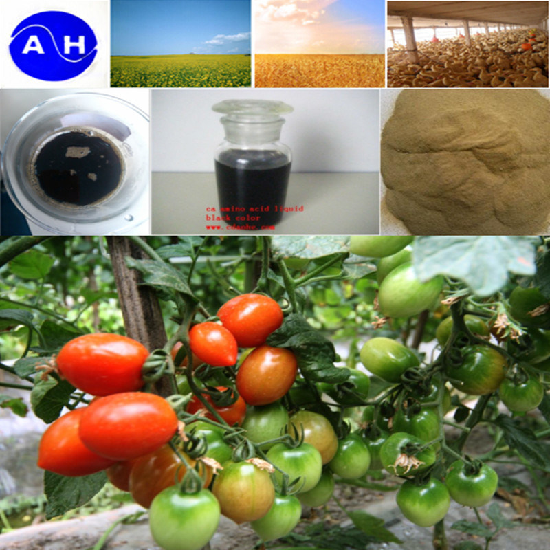 Chelation Group Amino Acids Plant Source Free From Chloridion pictures & photos