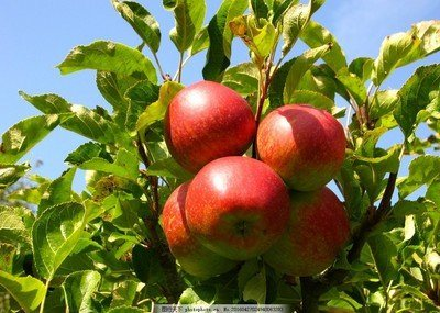 Bosman Fungicide Organic Effective Natural Fruits Trees Killer Hexaconazole pictures & photos