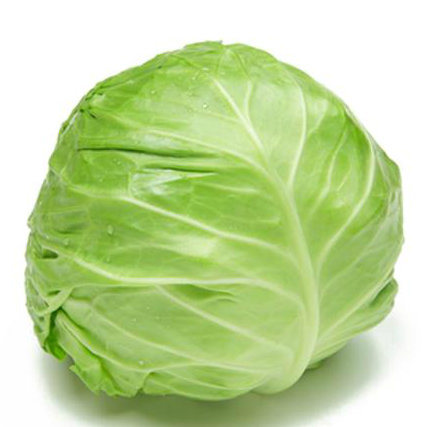 Fresh Green / White Cabbage pictures & photos
