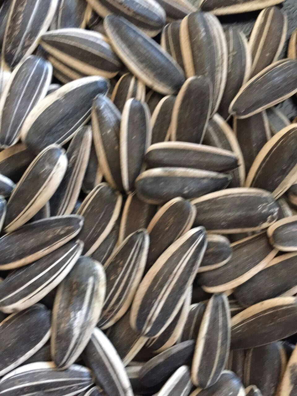 Professional Exporting High Quality Sunflower Seeds pictures & photos
