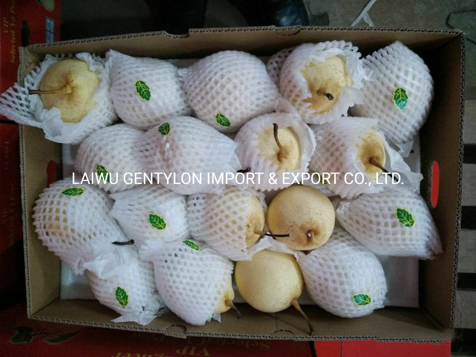 Factory Price Fresh Ya Pear for Import pictures & photos