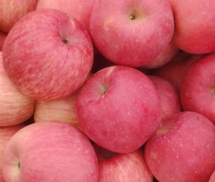 2016 Crop Fresh FUJI Apple