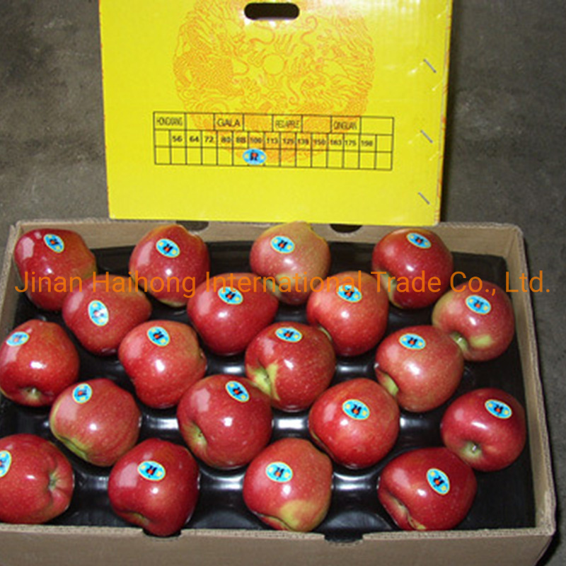 New Crop Fresh Gala/Red Star/Golden/FUJI Apple pictures & photos