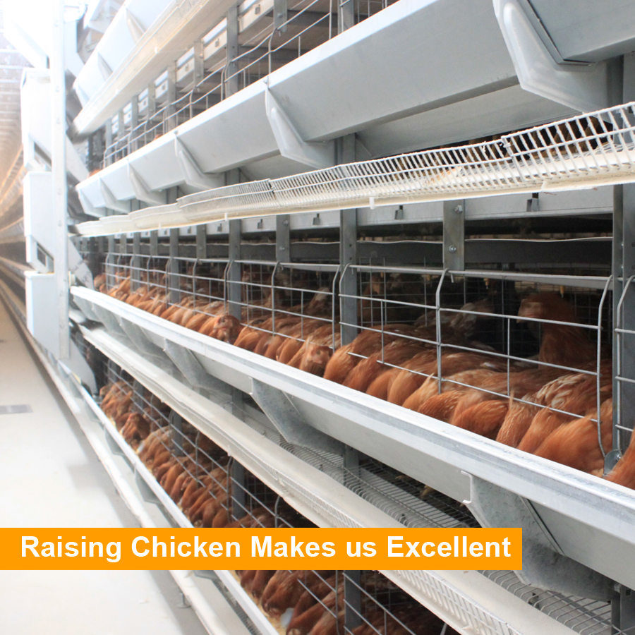 China H Type Galvanized Wire Mesh Automatic Poultry Layer Cages ...