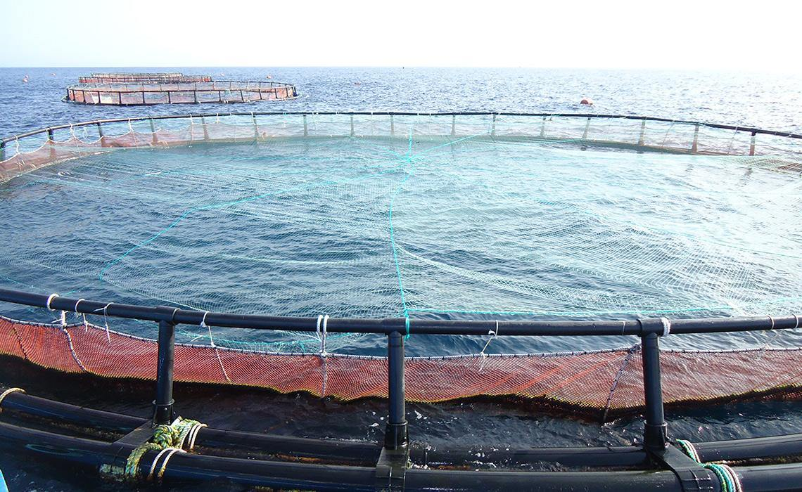 Aquaculture Seabass, Sea Bream Farming Floating Net Cage