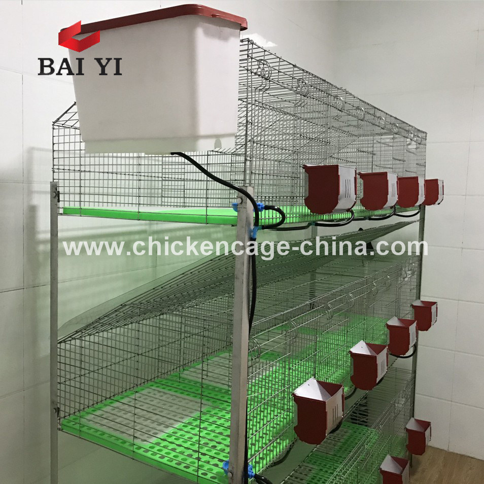 Building a Rabbit Cage Outdoor for Delivery