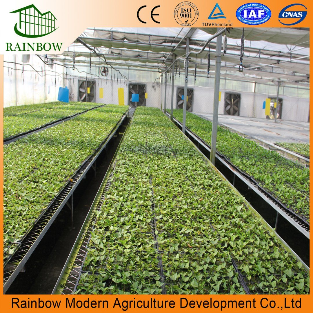 China Film Best Agricultural Multi-Span Greenhouse for Tomato