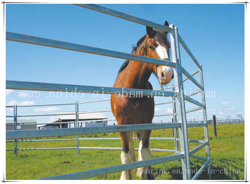 China Steel Horse Paddock Fence/ Yards Panel Wholesale - China Horse ...