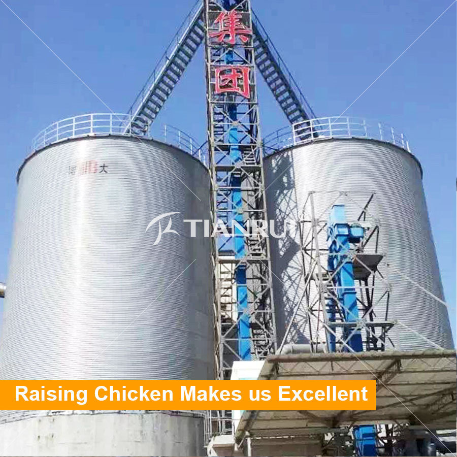 Broiler Poultry Chain Pan Feeding System Supplier