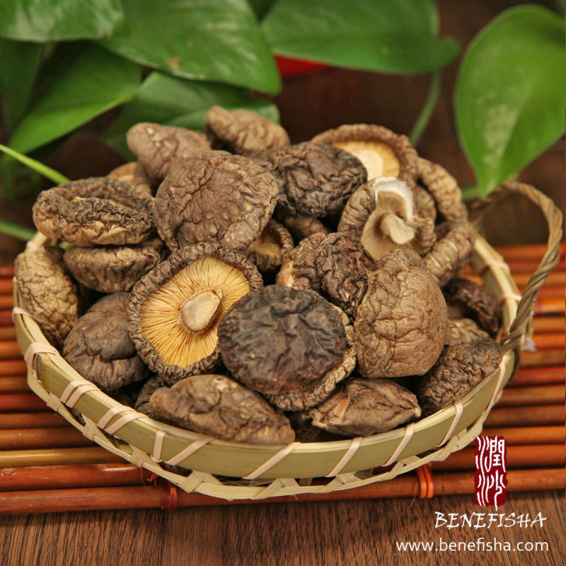 Dried Mushroom Black Surface (Thin)