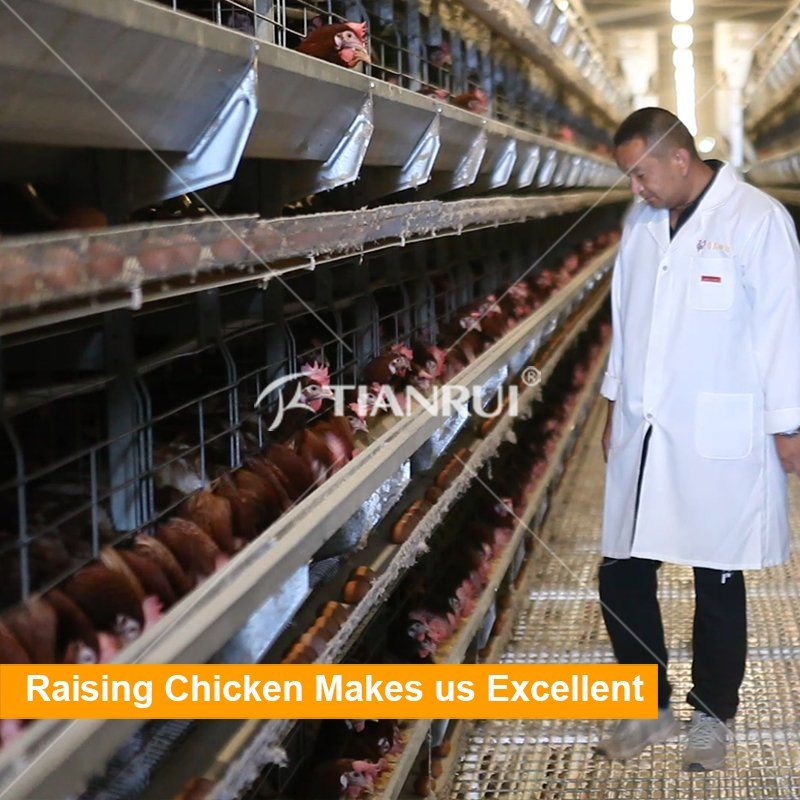 Chicken farm project poultry farming equipment for layer